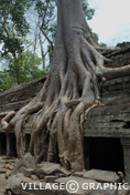 Photos Cambodge - Angkor - Ta Prohm - Ta Prohm