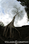 Photos Cambodge Angkor - Preah Khan -
